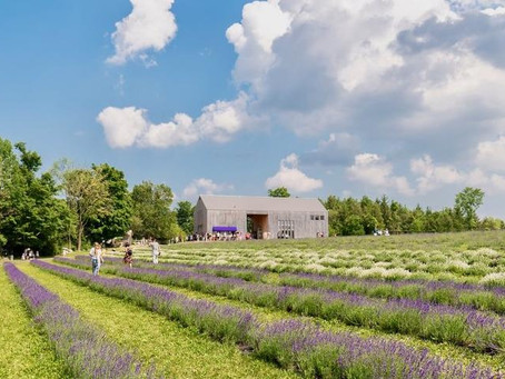 Overcoming Seasonality: How to Build a Successful Agritourism Business