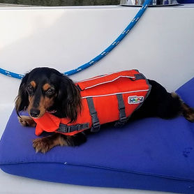 """""""Sailor"""" the wiener dog, our company mas"""