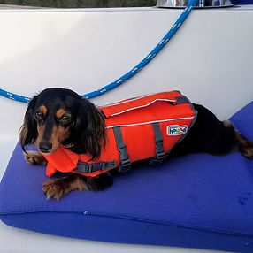 """Sailor"" the wiener dog, our company mas"