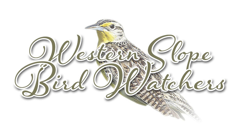 Western Slope Bird Watchers