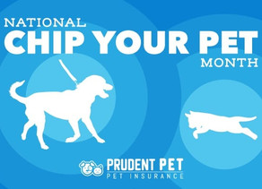 May is Chip Your Pet Month