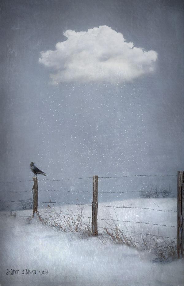 Snowbird In Reverse