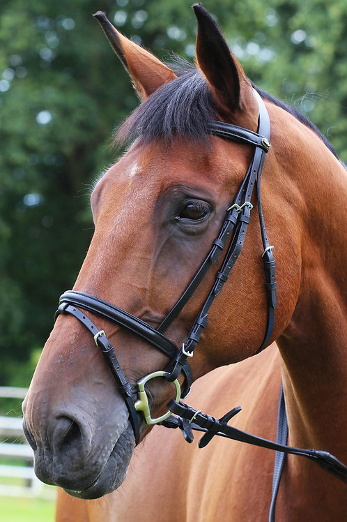 Gallop Padded Leather Bridle With Flash