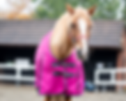 Online equestrian shop forall your horse turnout rugs from lightweight no fill rugs to heavy weights to kee your horse or ppony snug and warm allwinter lon