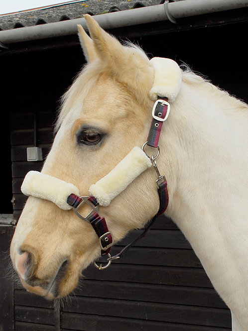 Windsor Fur Trimmed Headcollar