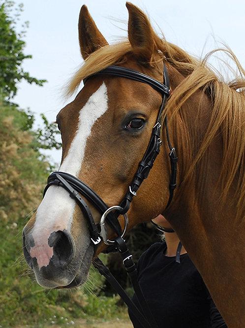 Windsor Equestrian Flash Bridle Nelsons equestrian