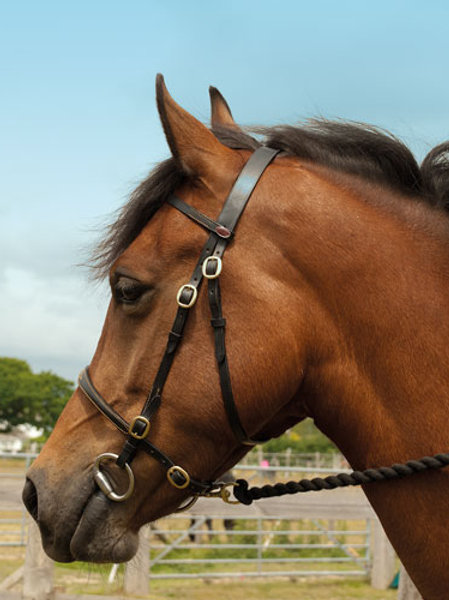 Leather In Hand Show Bridle