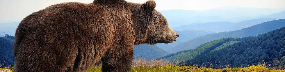 Alaska Bear 2.jpg