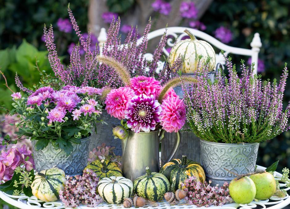 garden decoration with bouquet of pink dahlias,  autumn flowers and pumpkins.jpg