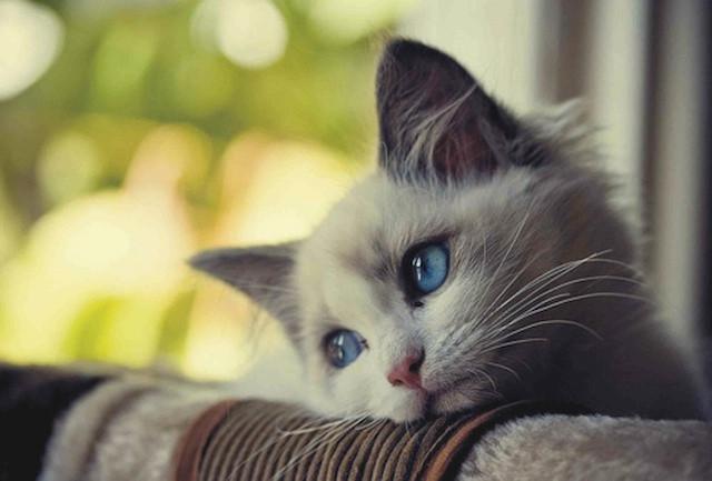 Thoughtful cat!