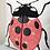 Thumbnail: Ladybird (Made to Order)