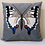 Thumbnail: Swallowtail Butterfly (Made to Order)
