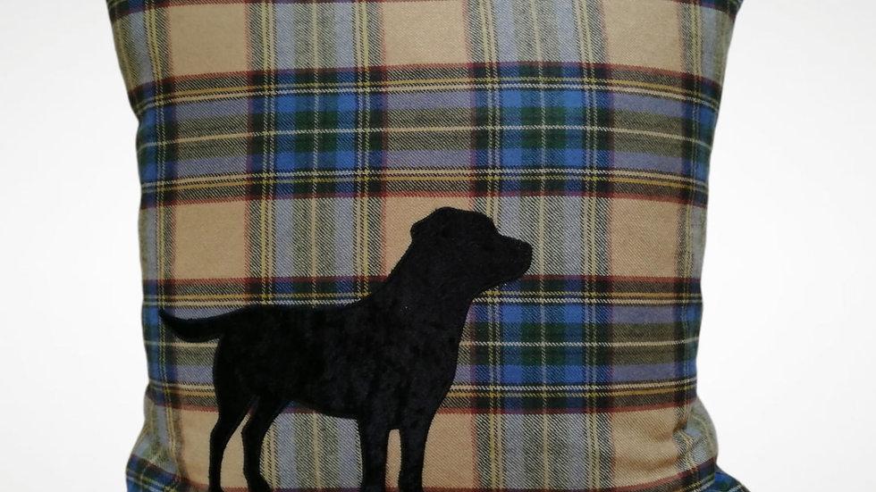 Velvet Black Labrador on Tartan