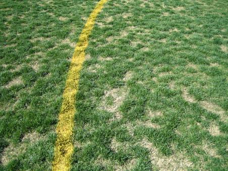 chad fields 011.jpg