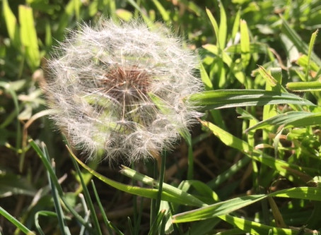 Grubs, dandelions, and snails, it must be spring