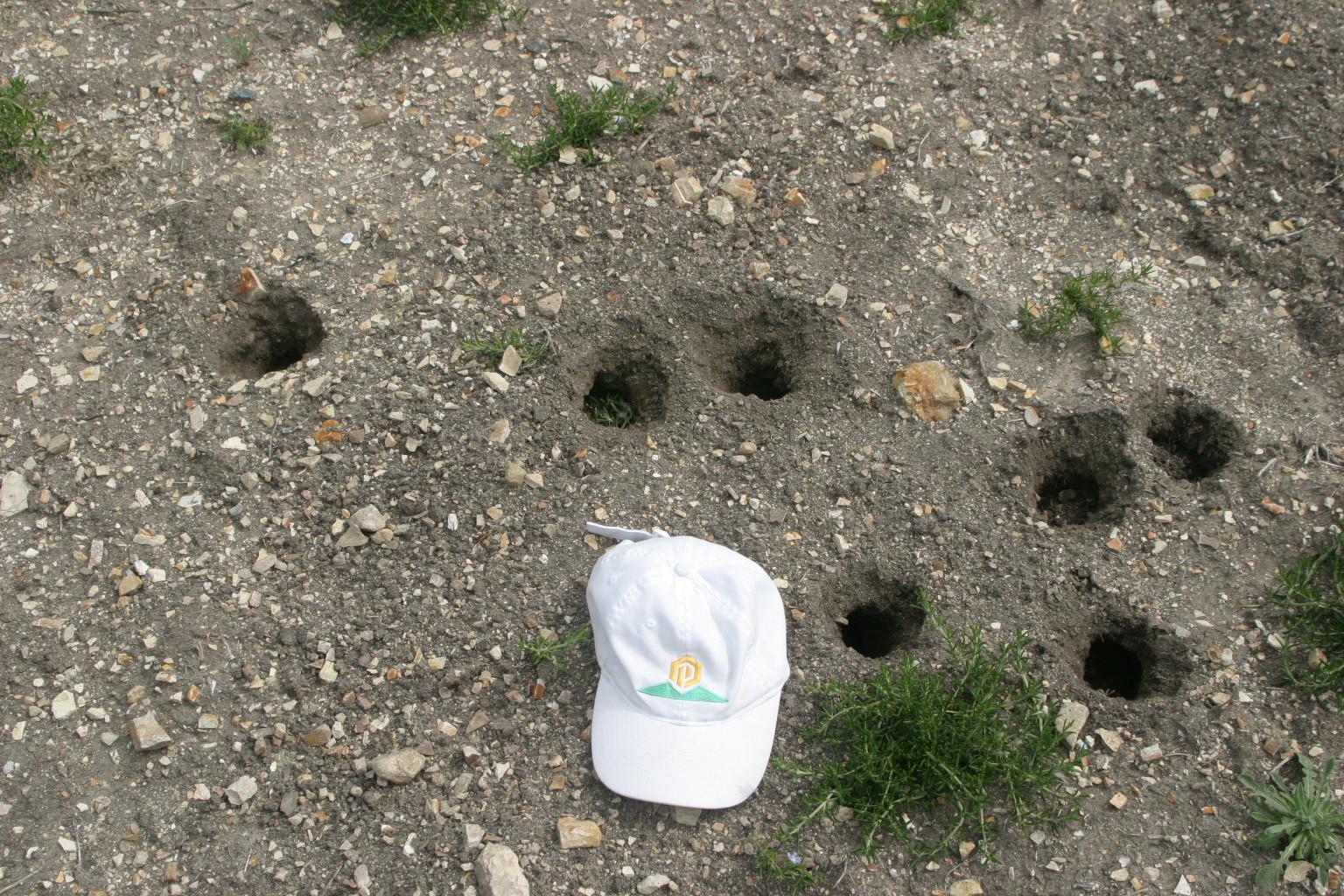Gopher holes