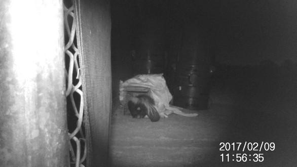 skunk video