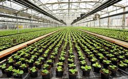 Next generation of farming?