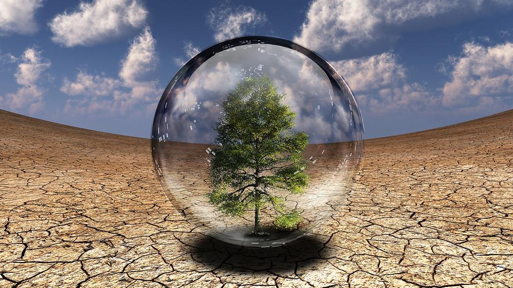 Tree inside glass bubble in desert.jpg
