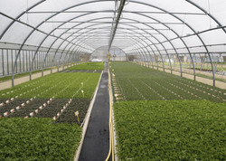 Giant greenhouses work