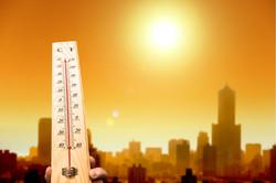 Escalating heat hurts crop yelds