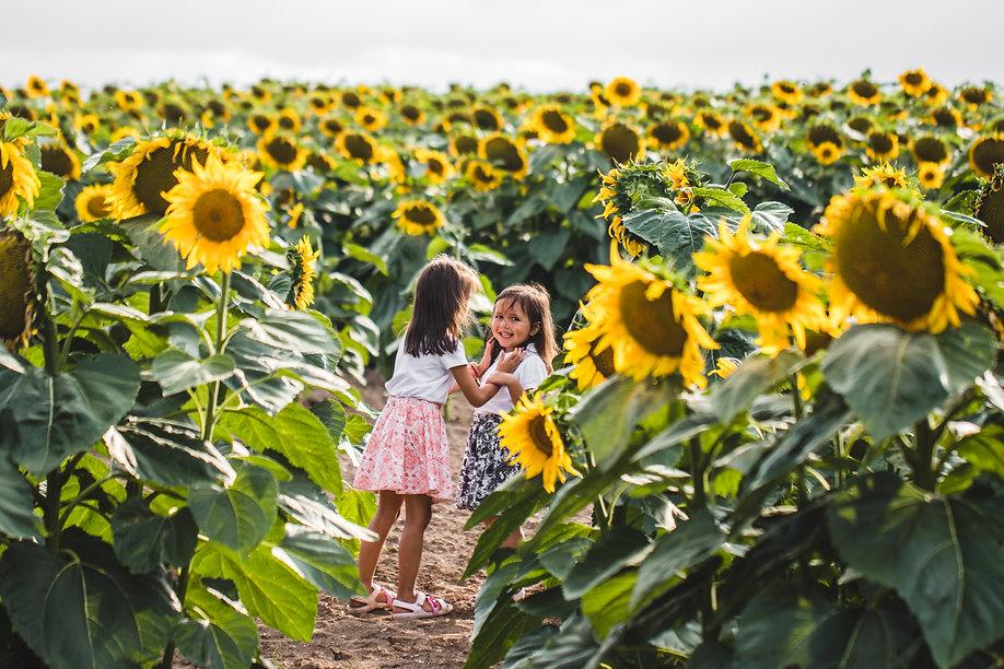 little-girls-among-of-a-sunflower-among-a-field-of-CSDYN4N.JPG