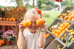 Harvest_Tyme_Pumpkins