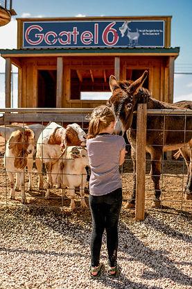 Maxwell_Pumpkin_Farm_Goats_Donkeys (15).