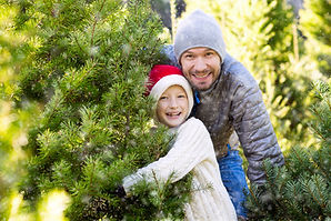 Robinson Family Farm Christmas Trees.jpe