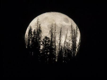 Luna de Cosecha (Martes 21 de septiembre 2021)