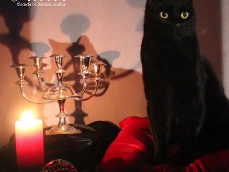 Gatos mágicos en la cultura pop