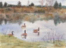 380_Lunow_Pond-ering_Geese.jpg