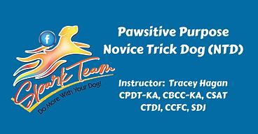 NTD Spark Team(1).png