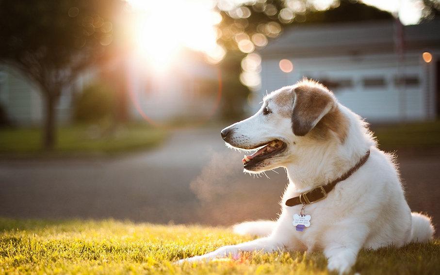 Cute_Dog_Animal_in_Garden_HD_Wallpapers.