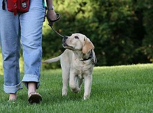 Loose-Leash-Walking-1.jpg