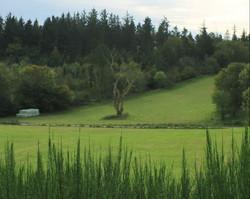 Det døde træ på Tusborg