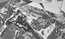 Mosen 1954