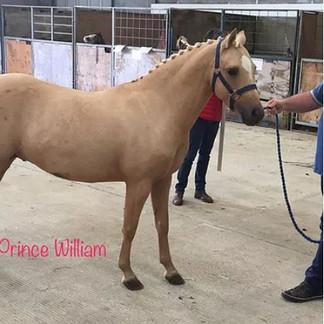 RIANWYN-PRINCE WILLIAM - ETALON