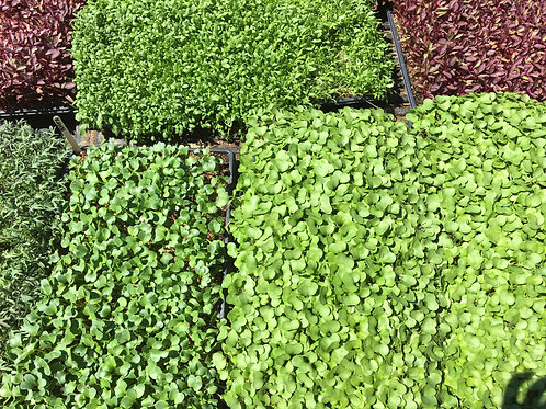 Breadseed Farm Microgreens share