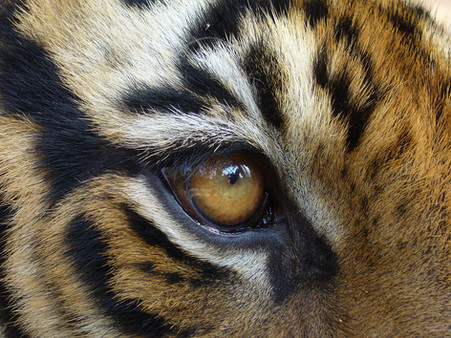 How privilege puts out the eye of the tiger - and what we can do about it