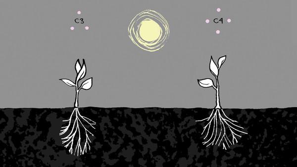 photosynthesis_3840D.jpg
