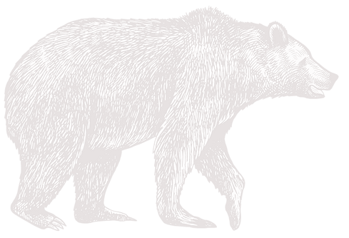 bear-2_edited.png
