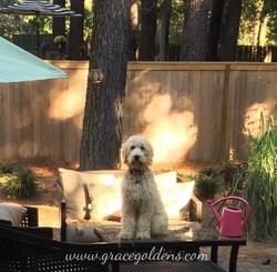 Sadie outdoor