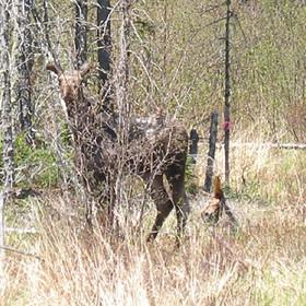 wildlife31.jpg