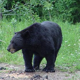 wildlife24.jpg
