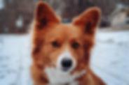 Dog Park-3.jpg