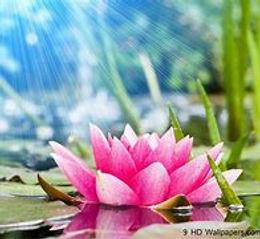Lotus 5.jpg