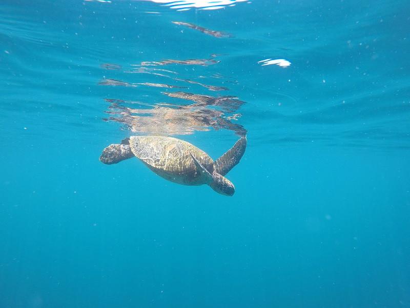 Ein Paradies mitten im Pazifik