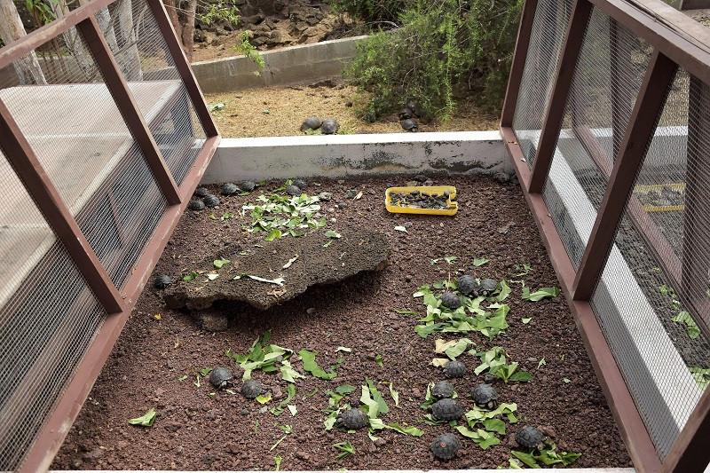 Schildkröten Aufzucht