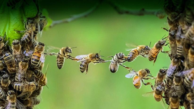 abeille 2.jpg